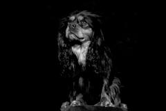 chien_max1