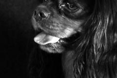 chien_max2