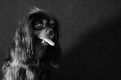chien_max3
